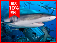 7泊8日 コーラルシー・サファリ  [マイクボール・木曜発]