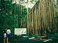 キュランダ以外の熱帯雨林ツアー