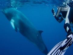 �ߥ����顦���ڥ���롪 4��5��åɥۡ������ܥ��ե����ӥȥ�å�-([Deep Sea Divers Den������ȯ])