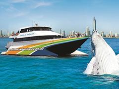 半日ホエールウォッチングクルーズ・Tall Ship Cruises社[ゴールドコースト発] 口コミ情報