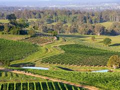 [少人数限定専用車] IEC VIP ハンターバレー・ワイン体験ツアー シドニー発