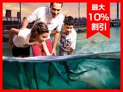 モートン島観光 タンガルーマ野生イルカに餌づけと4WDで砂丘ドライブ!VIPラウンジ利用[ゴールドコースト発]