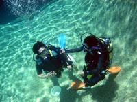 PADIダイブマスターコース(Dive 7 Seas)