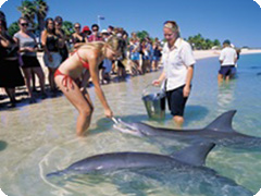 ��󥭡��ޥ������ɥ�ե���꥾����-(Monkey Mia Dolphin Resort)