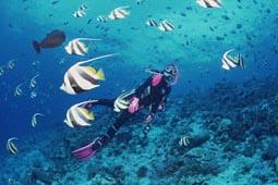 PADIアドバンスコース2・3日間・船上1又は2泊付[Deep Sea Divers Den]
