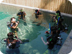 PADIオープンウオーター&アドバンスコース6日間・船上3泊付[Deep Sea Divers Den]