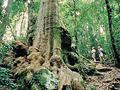 中東部オーストラリアの多雨林保護区