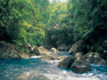 北部クィーンズランドの熱帯雨林
