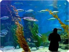 メルボルン水族館