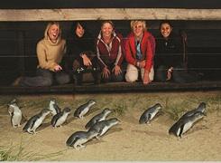 フィリップ島・ペンギンパレード・エクスプレスツアー・Bunyip Tours[メルボルン発]