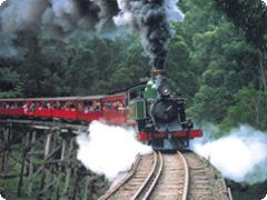 蒸気機関車パッフィンビリー鉄道&ヤラバレーワイナリーツアー・Eco Platypus Tours [メルボルン発]
