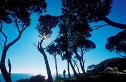 フィリップ島・ウィルソンズプロモントリー国立公園ツアー・1泊2日 Bunyip Tours[メルボルン発]