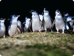 ペンギンパレード&ワイルドライフパークツアー・GOGO TOURS [日本語ガイド付]