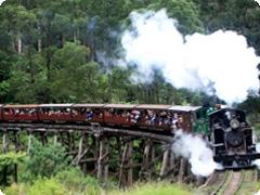 パッフィンビリー蒸気機関車とダンデノン丘陵半日ツアー・JMG Tours[日本語ガイド付]