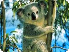 土ボタルと野生動物探検エコサファリツアー・Tour Gold Coast社[ゴールドコースト発]