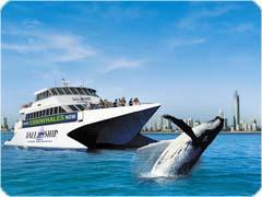 半日ホエールウォッチングクルーズ・Tall Ship Cruises社[ゴールドコースト発]