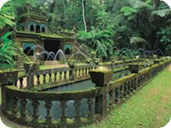 午後発「天空の城」パロネラパークと神秘熱帯雨林・ケアンズ発ツアー