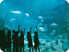 シドニー水族館・アトラクションパス