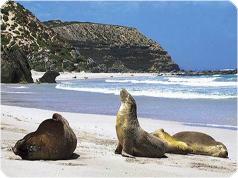 カンガルー島・宿泊&シーフードディナー付き2日間 往復クルーズツアー・アデレード発