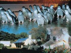 ペンギンパレード&ワイルドライフ・なるほど ザ・ペンギン・Mr.ジョンツアー[日本語ガイド付]