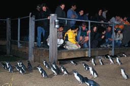 ペンギンパレードと動物ふれあいの旅・JMG Tours[日本語ガイド付]