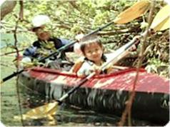半日カヤックツアー・大自然の中を水上ツーリング[ゴールドコースト発]
