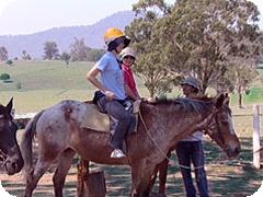射撃と乗馬の1日ツアー Gummies Bush Tours[ゴールドコースト]