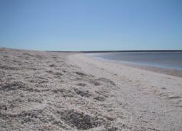 世界遺産モンキーマイア&貝殻でできた美しいシェルビーチ1日フライトツアー・Kookaburra Air[パース発]