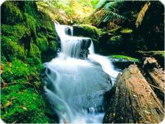 マウントフィールド国立公園とタスマニアの美しい町ロス・日本語ガイド付ツアー