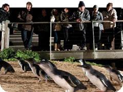 最安値!フィリップ島ペンギンパレード&コアラ保護区訪問・Great Sights [メルボルン発]