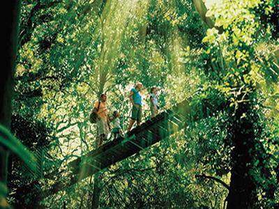 ゴールドコースト世界自然遺産とマウントタンボリン巡りエコガイド同行