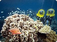 グリーン島ツアー&世界自然遺産グレートバリアリーフ・アドベンチャーツアー
