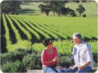 一面に広がるワイン畑