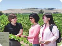 ワイン畑の見学