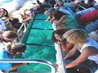 2泊3日世界遺産グレートバリアリーフに浮かぶ島レディ・マスグレーブ島 宿泊パッケージツアー<ブリスベン発>