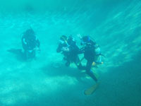 Dive 7Seas