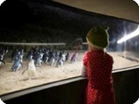 ペンギンパレード・ムーンライトエクスプレスツアー・メルボルン発