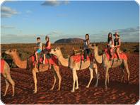 広大な大地ラクダ乗りツアー
