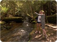 マウントフィールド国立公園、タスマニアデビル、マウントウェリントンツアー