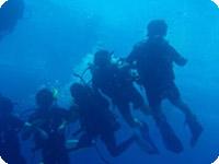ケアンズ体験ダイビング